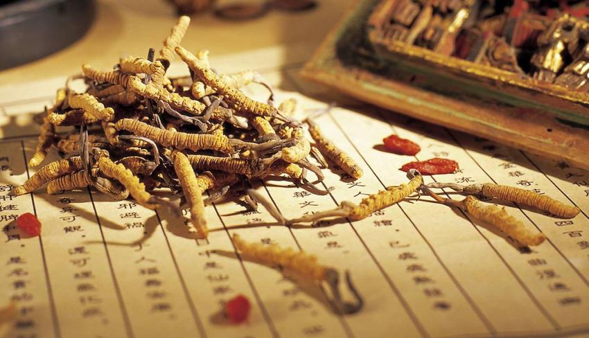chiết xuất đông trùng hạ thảo