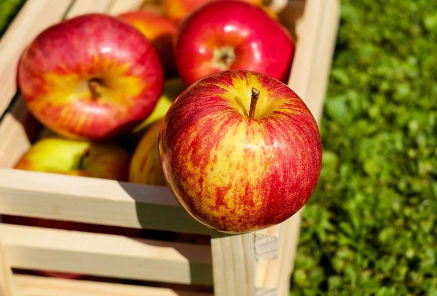 Vỏ và thịt táo đều là nguồn dinh dưỡng cực tốt cho sức khỏe người dùng