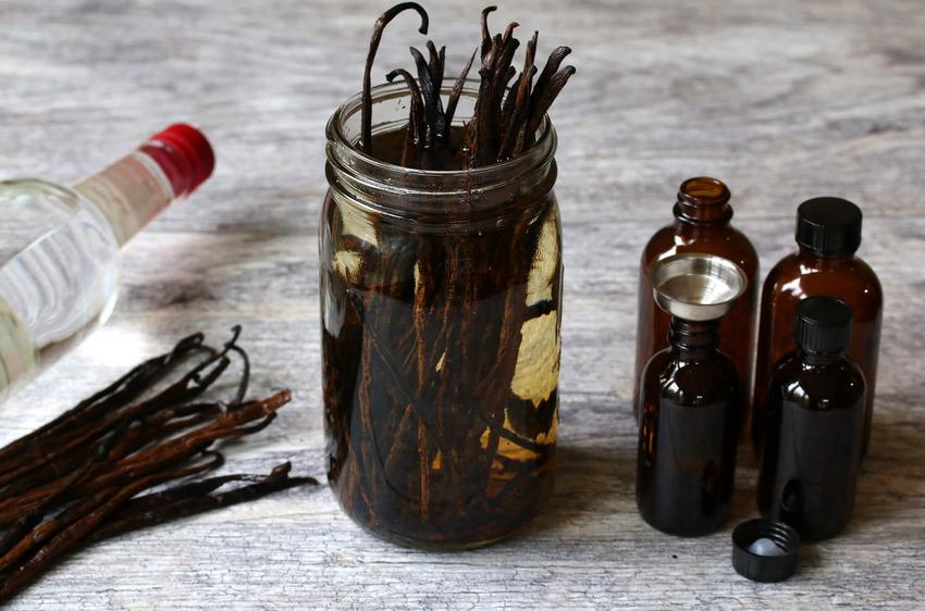 Để chiết xuất thành công hương vanilla cần trải qua nhiều công đoạn