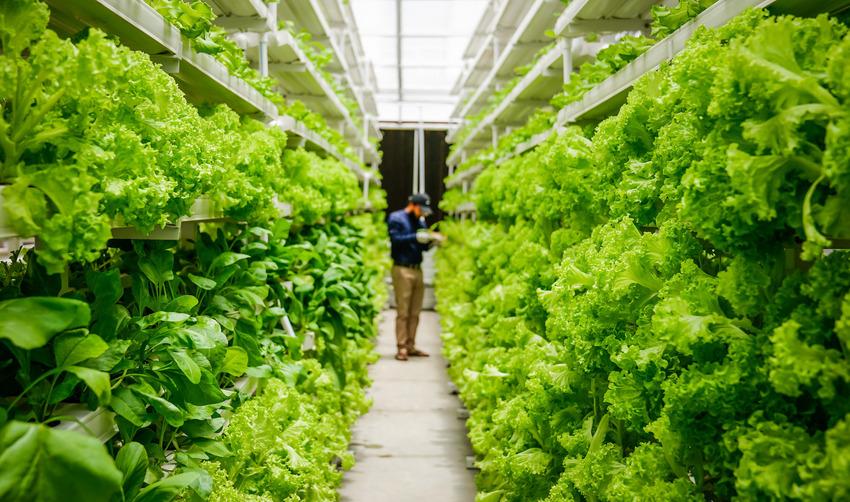 Trang trại thẳng đứng là một trong những nguồn nuôi trồng nguyên liệu bền vững trong 10 năm tới
