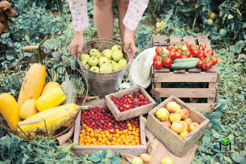 Thói quen ăn uống lành mạnh sẽ cải thiện chất lượng cuộc sống