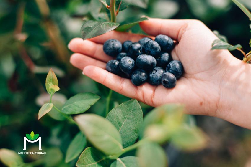 Nguồn gốc tự nhiên, không chứa chất bảo quản và giàu protein là những ưu tiên của người tiêu dùng
