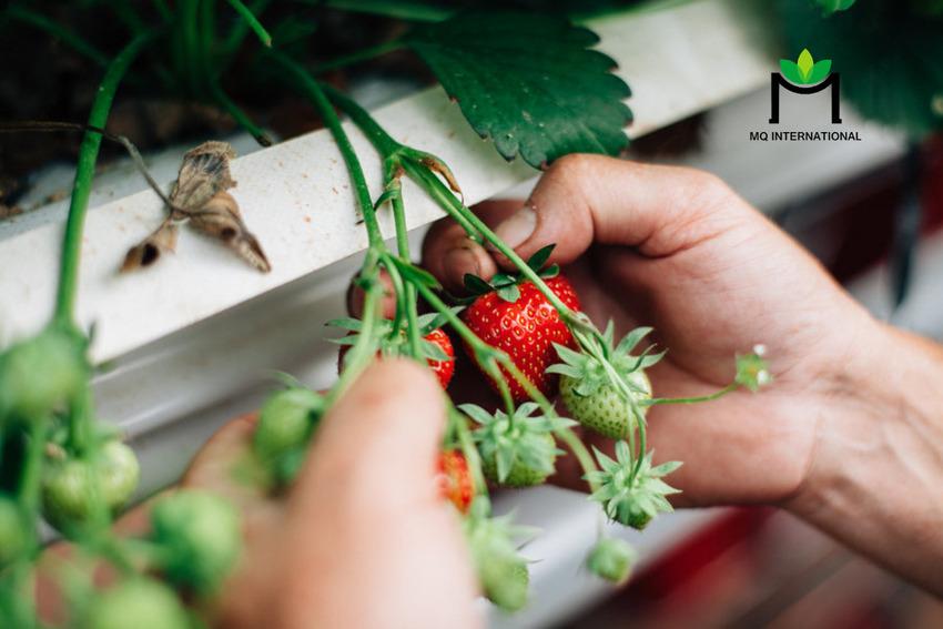 Thế hệ Baby Boomer đặc biệt quan tâm tới thực phẩm tốt cho sức khỏe