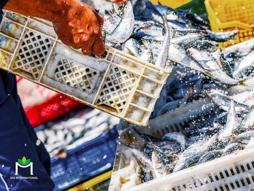 Đầu tư vào phát triển hải sản từ thực vật sẽ giúp giải quyết vấn đề môi trường và an ninh lương thực