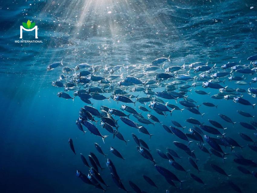 Khai thác quá đã làm ảnh hưởng nghiêm trọng đến môi trường và hệ sinh thái thủy sinh