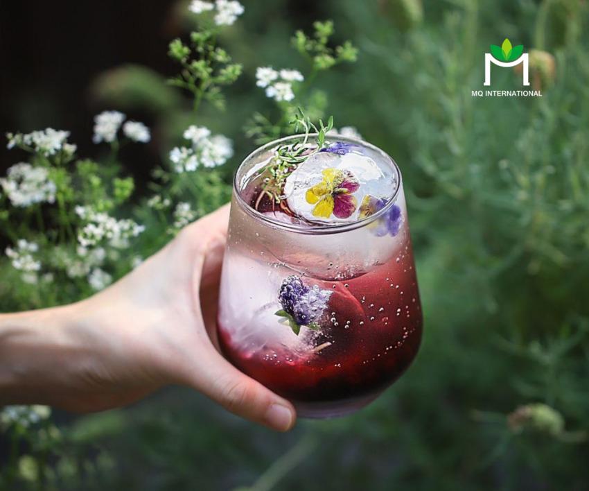 Các loài thảo mộc, hoa và gia vị được ứng dụng nhiều trong đồ uống