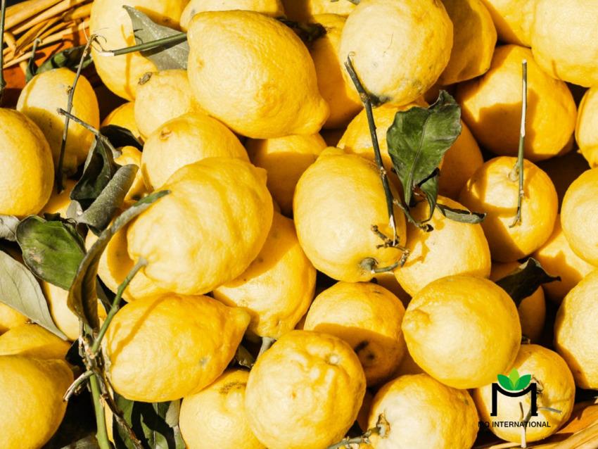 Hương yuzu là hương vị của năm 2021
