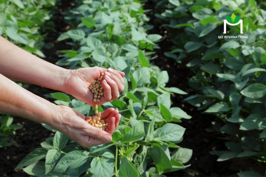 Việc dồi dào tài nguyên nông nghiệp giúp Việt Nam có nhiều điện kiện phát triển ngành sản xuất thịt thực vật