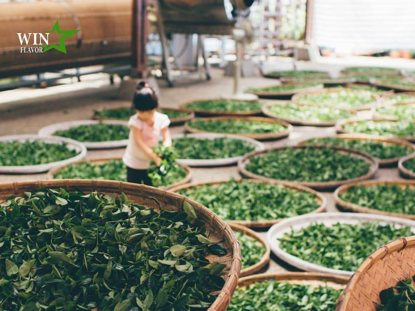 Chin-Shin là loại trà có lẫn hương hoa cực độc đáo