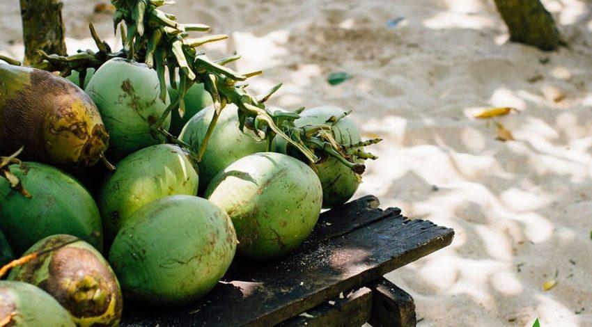 Điều lệ sản xuất dừa bền vững được ký kết vào cuối năm 2020