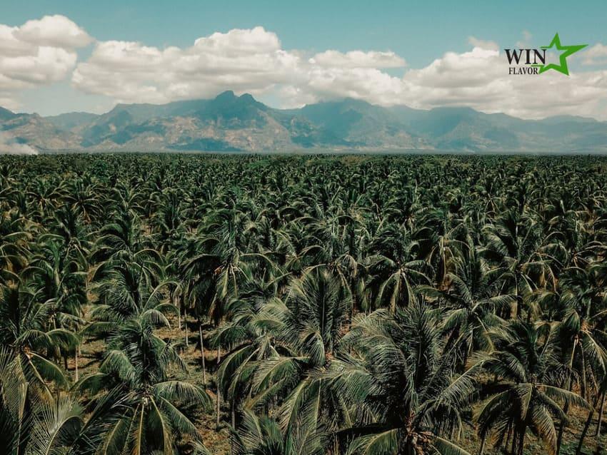 """Nguồn cung dừa không đủ để đáp ứng lượng cầu """"khổng lồ"""" từ thị trường"""