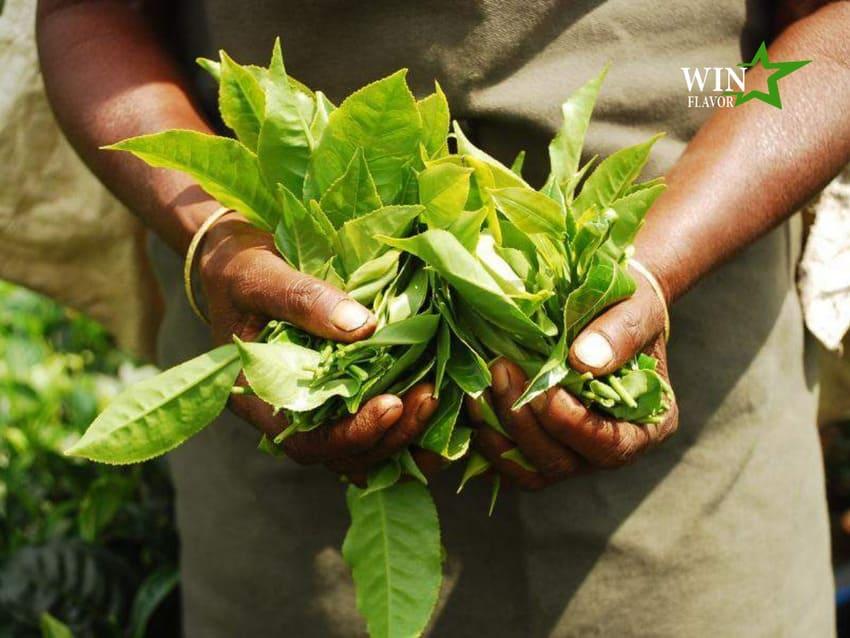 Trà và các chế phẩm làm từ hương trà là một thị trường F&B tiềm năng tại châu Á